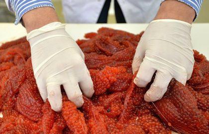 Киржачская красная икра: опасно для здоровья