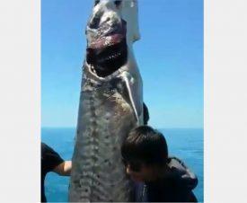 Абхазские браконьеры выловили 200-килограммовую белугу и похвастались в соцсетях