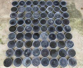 Из теневого оборота в Приморье изъято 36 кг черной икры