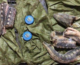 Астраханцы изготавливали браконьерскую черную икру в заводских условиях