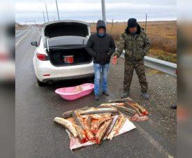 """Астраханец """"нашел"""" 17 осетров на берегу водоема"""