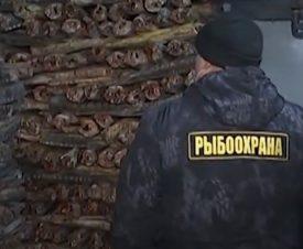 На востоке столицы к новогодней продаже готовили 10 тонн браконьерской осетрины