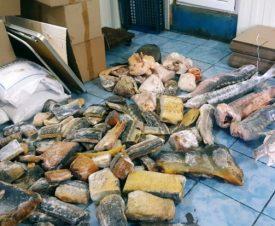 Более 200 тонн осетров и другой рыбы изъято в Астраханской области в 2020 году