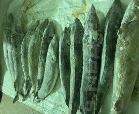 Житель Ямала не успел сбыть более 400 кг рыбных деликатесов