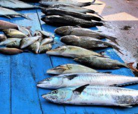 Создан подкомитет по рыбным вопросам