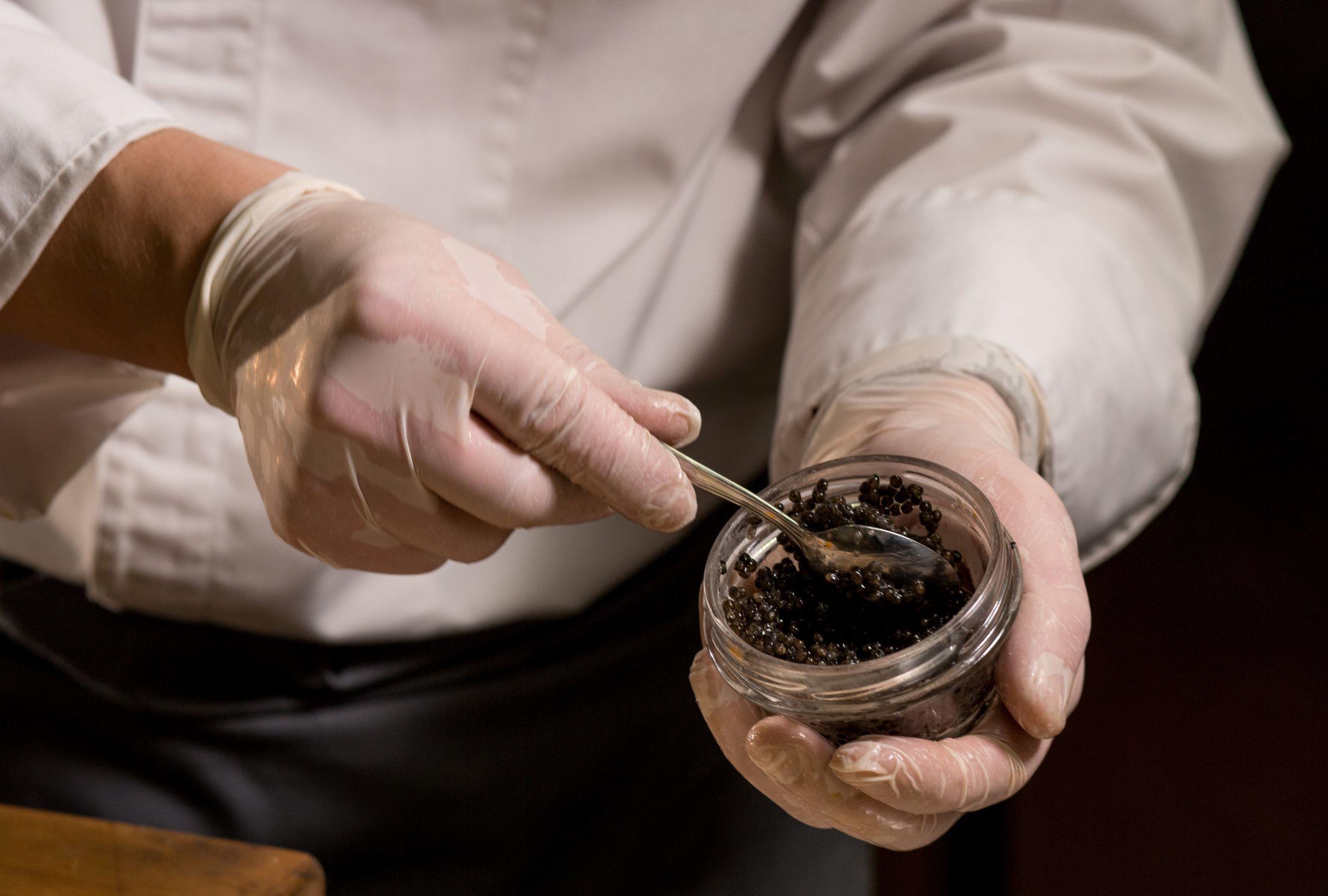 Эксперт берет образец черной икры для анализа, исследования.