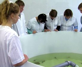 За аквакультурой будущее: спрос на рыбоводов растет
