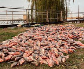 За один выход в Азовское море браконьеры наловили рыбы на 4 млн рублей