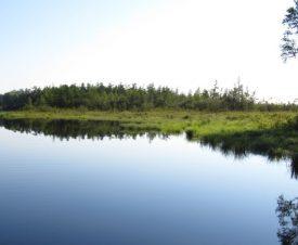 Только за один рейд в бассейне реки Анюй инспекторы выявили 12 случаев браконьерства