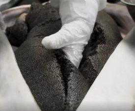 В придунайских странах незаконно продается около трети черной икры и осетрины