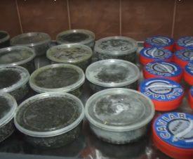 На Кубани бизнесмену светит уголовная статья за хранение икры и рыбы без маркировки