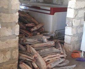 Полицейские Мангистау нашли около трех тонн браконьерских осетров