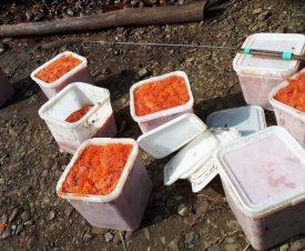 На Камчатке браконьеры бросили более 180 кг икры и сбежали от рыбоохраны