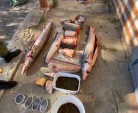 В Хабаровском крае у браконьеров нашли рыбу и черную икру на 23 млн рублей