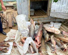 Астраханские полицейские накрыли производство опасных рыбных деликатесов