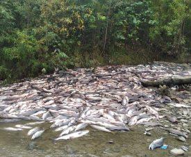 Экологический шок: на Сахалине браконьеры выпотрошили 100 тонн горбуши ради икры
