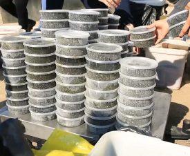 Тонну осетровых деликатесов изъяли силовики у браконьеров в Якутии